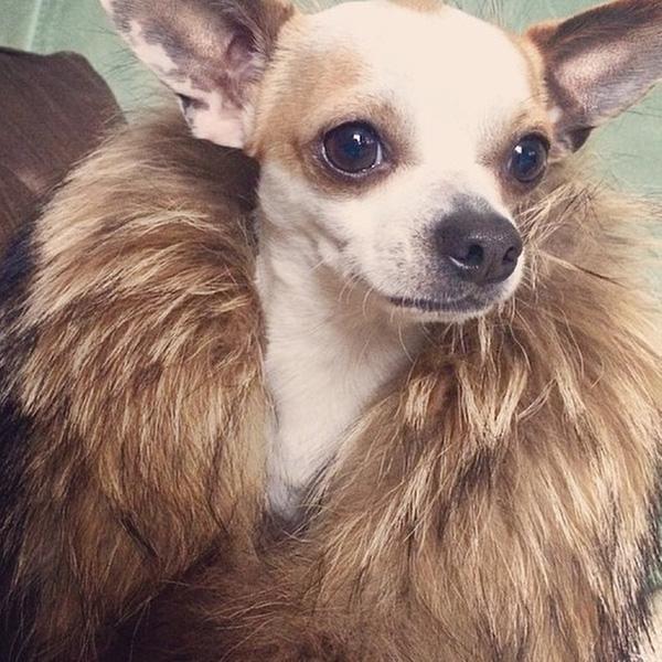 Lác mắt trước cuộc sống vương giả của Hội chó nhà giàu thế giới
