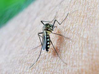 Εμφάνιση κρουσμάτων ελονοσίας στην Ελλάδα. (Στοιχεία από το ΚΕ.ΕΛ.Π.ΝΟ.)
