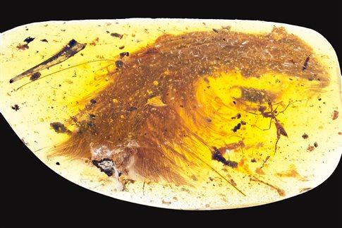 Bρέθηκε ουρά δεινοσαύρου παγιδευμένη και διατηρημένη σε ήλεκτρο