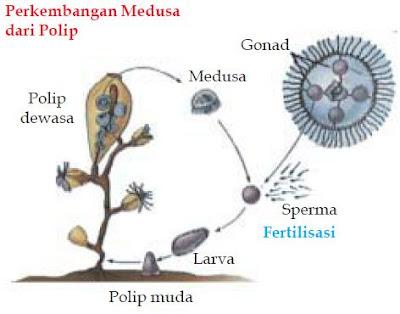 Pengertian Metamorfosis dan Metagenesis serta Perbedaan Metamorfosis Dan Metagenesis