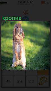 На задних лапах по стойке смирно стоит обычный кролик на поляне
