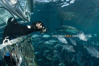 Scuba Diving, Underwater Photography, Paparazsea