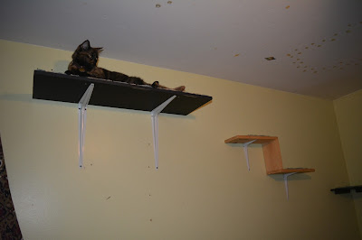 Providing cats with vertical space