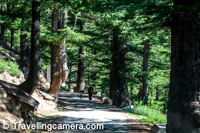 Mountains around Kalpa village are full of high & dense deodar forests. Lot of movies and songs are shot around this region of Himachal Pradesh.