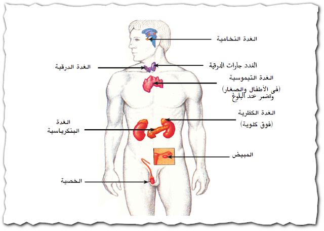 الهرمونات والغدد الصماء