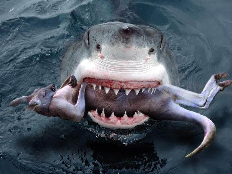 Outback Snack: Great White Sharks Australia