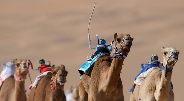 Robots for Camel Race