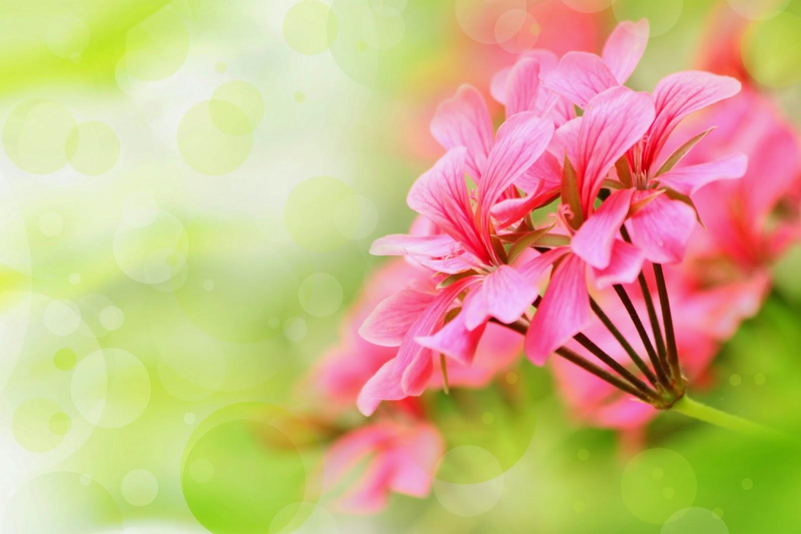 Imagenes Fotograficas: Imagenes Bonitas De Flores Para