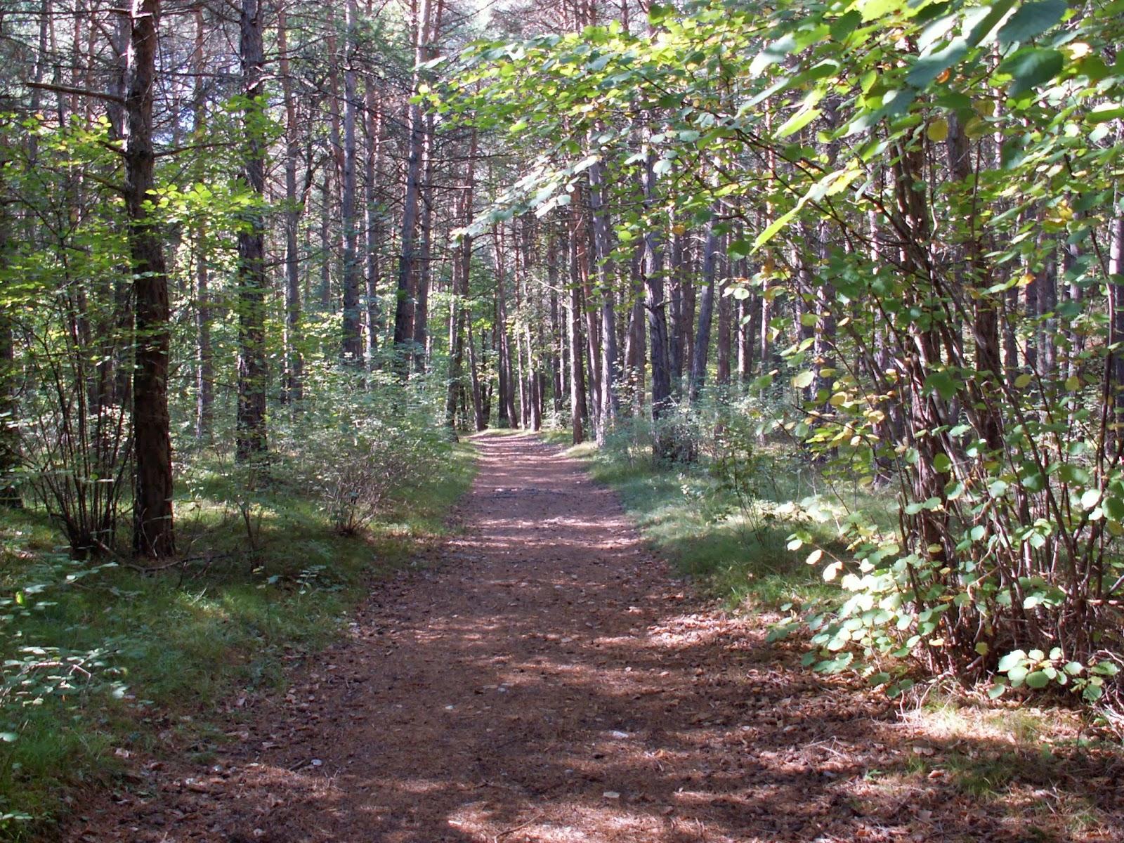 Αποτέλεσμα εικόνας για δάσος πηλίου