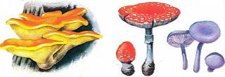 Parazit Bitkiler Hakkında Bilgi