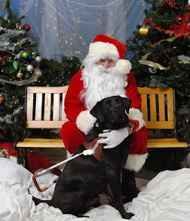 Leif a black labrador sits beside a man in a santa claus suit, red and white tunic, red trousers, black boots and belt and a long white beard.