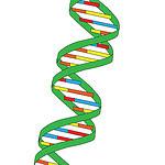 DNA armazena dados