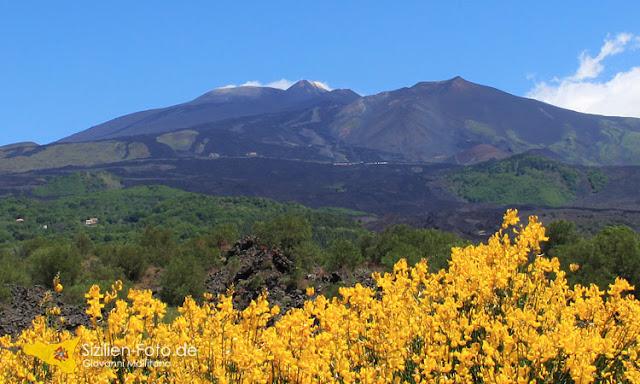 Vulkan Ätna Südseite mit blühender Ginster