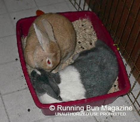 Bunny matchmaking