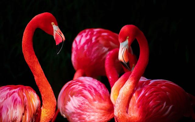 uccelli, animali,
