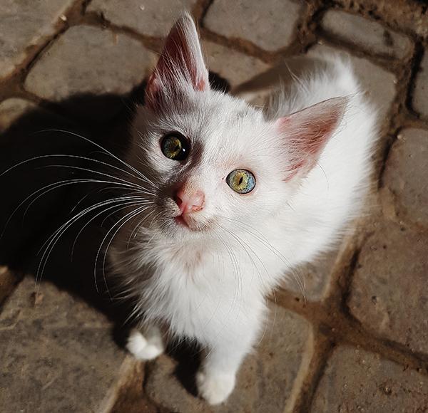 earth eyes kitten