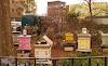 Νέα μόδα στη μελισσοκομία: Υπερδιπλασιάστηκαν οι μελισσοκόμοι και βάζουν μελίσσια παντού