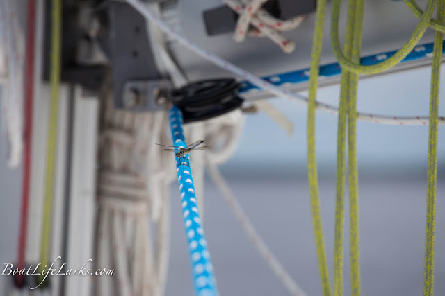 Dragonfly in sailboat rigging, ICW, North Carolina