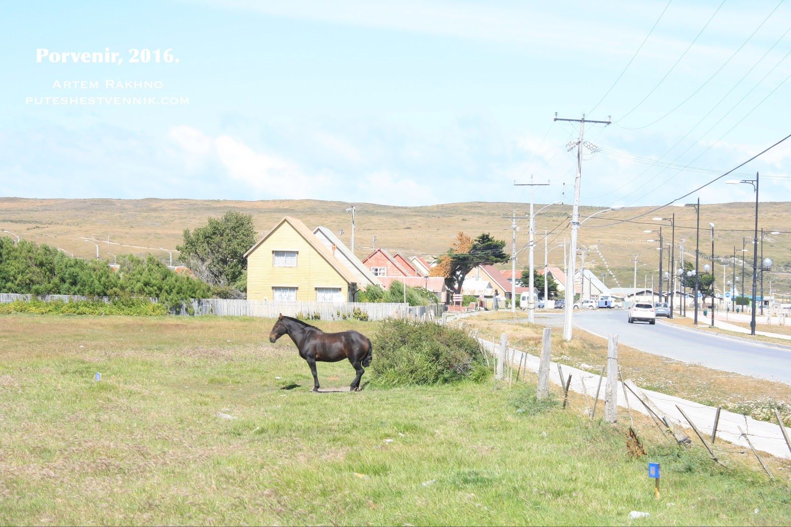 Лошадь на улице в Порвенире