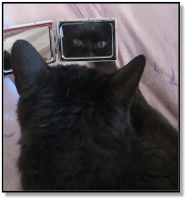 Katze im Spiegel
