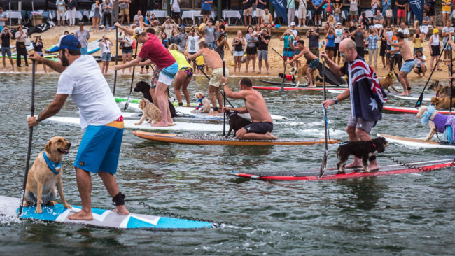Every Man And His Dog paddlers racing with dogs on their boards