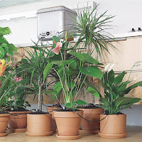 come-irrigare-piante-incustodite