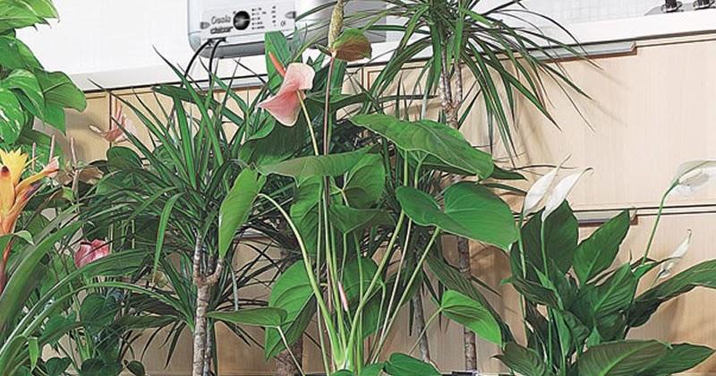Lavori creativi fai da te an online help come auto for Annaffiare le piante