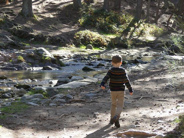 Niño caminando en un bosque al lado de un río