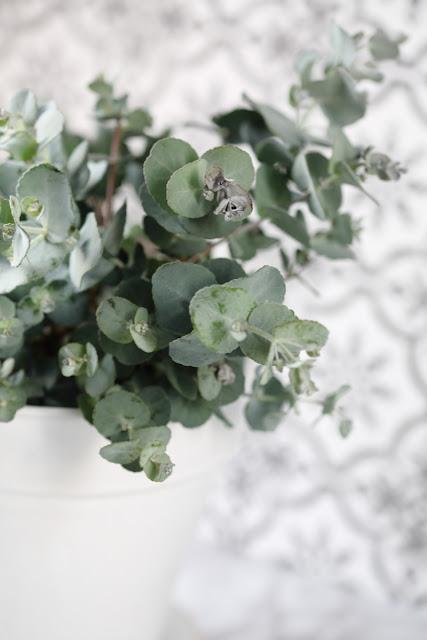eucalyptys, still life, #kukkailottelua