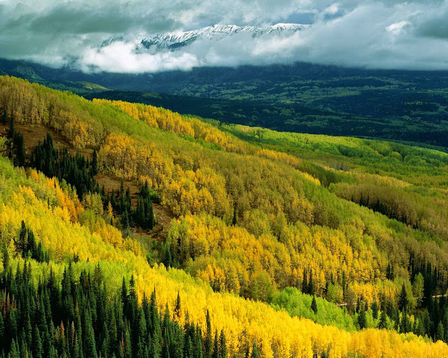 yellow green trees hills autumn