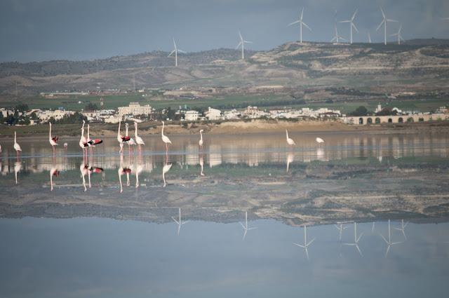 Larnaca Salt Lake; Larnaca, Cyprus