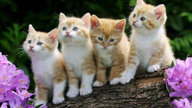 Benarkah Menabrak Kucing Bikin Sial?
