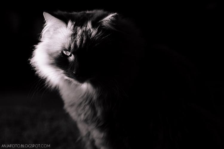 kot, koty, fotografia kotów, kocia fotografia, fotografia czarno biała, balc and white photography