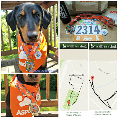 aspca virtual 5k doberman mixed breed rescue dog