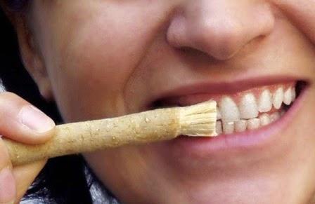 Siwak untuk gigi putih