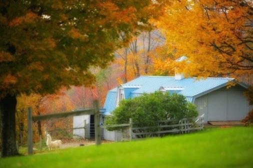 alpaca farm -image:westmountainfarmnow.com