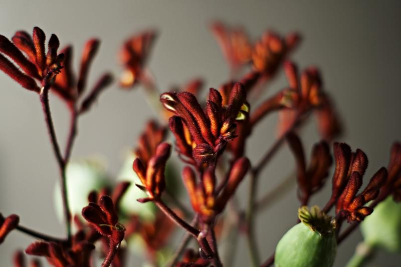 Blog + Fotografie by it's me! - Flower Friday, geweihähnliche dunkelrote Blütenzweige
