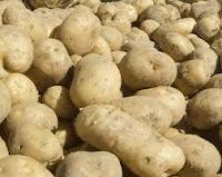 البطاطس مصدر نباتي