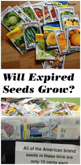 will expired seeds grow?