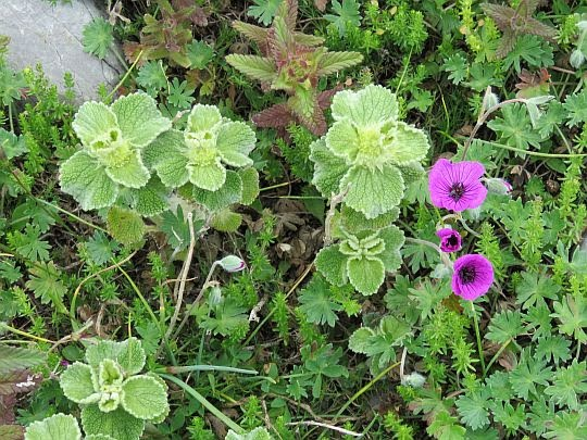 Flora na stoku Liakoury.
