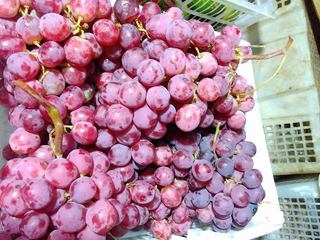 Anggur Merah Untuk Kesehatan Tubuh