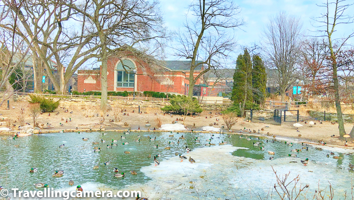 I visited the zoo in the month of March and the water ponds inside the zoo were freezing. Above photograph shows colourful birds on frozen lake. Most of these birds are northern pintails.