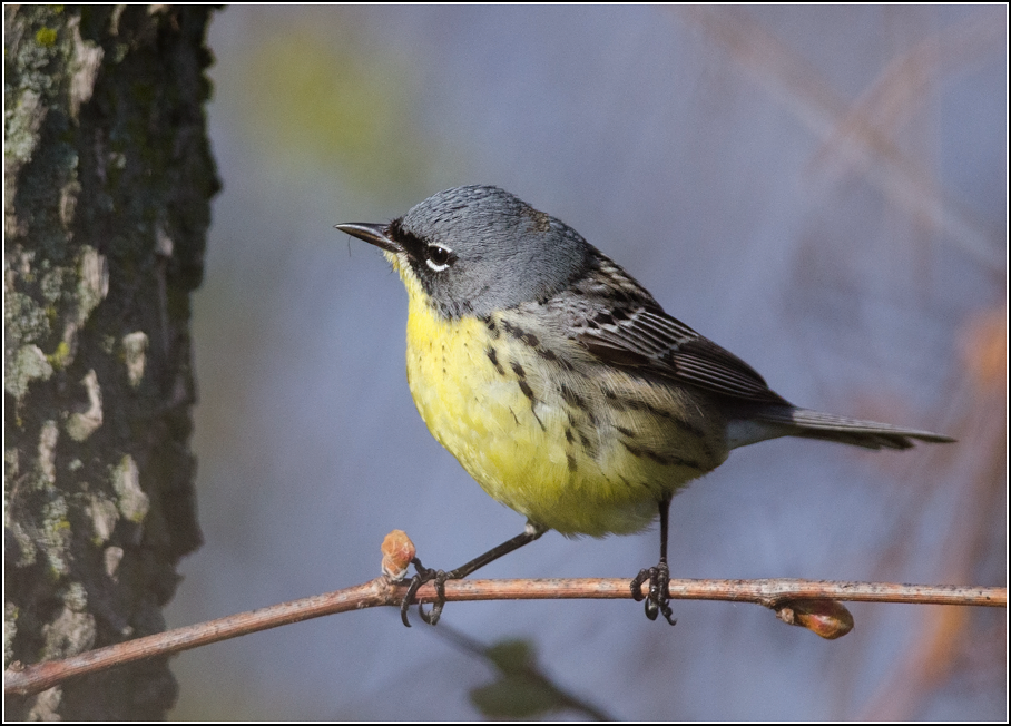 3 Warbler Photography Tips for a Better Shot this Spring