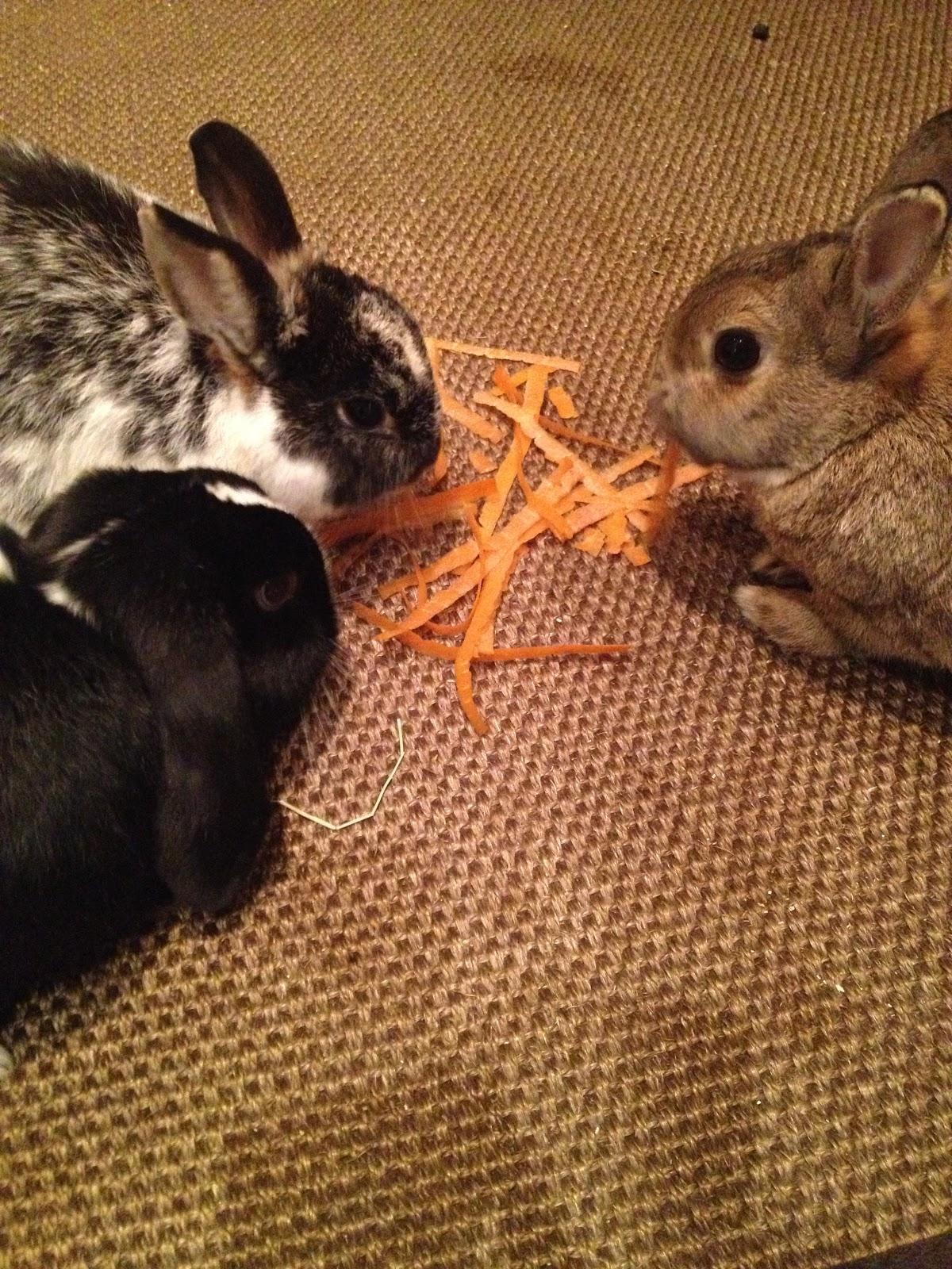 kan kaniner spise sitronmelisse