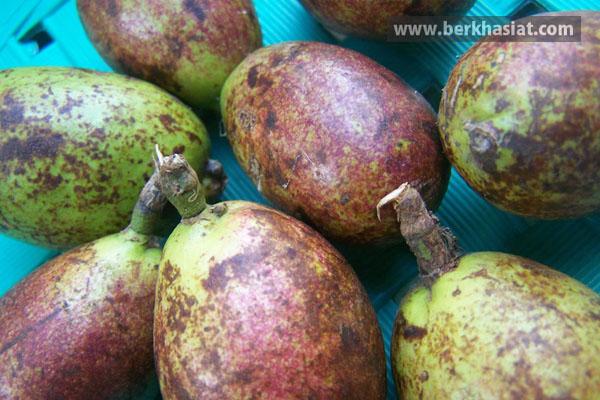Buah yang mempunyai nama latin Pometia pinnata ini merupakan tumbuhan khas Papua dan menja Manfaat Buah Matoa
