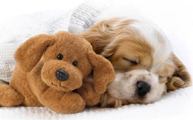Slapende hond met teddybeer