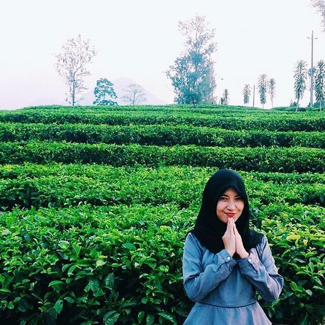 foto kebun teh pagilaran jateng