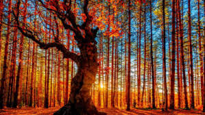 world best forest  hd wallpaper download53