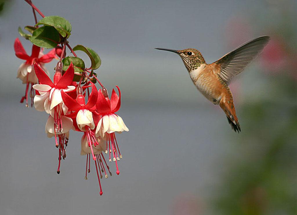 HD Lovely Birds Wallpapers