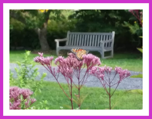Monarch in New England